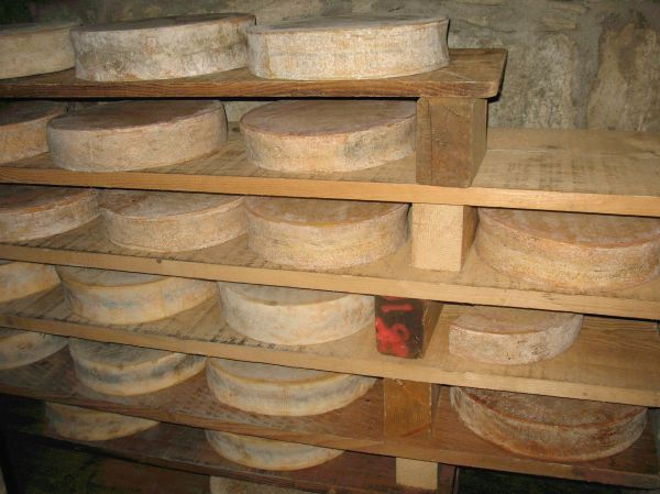 Artisan Cheese Italian Alps.