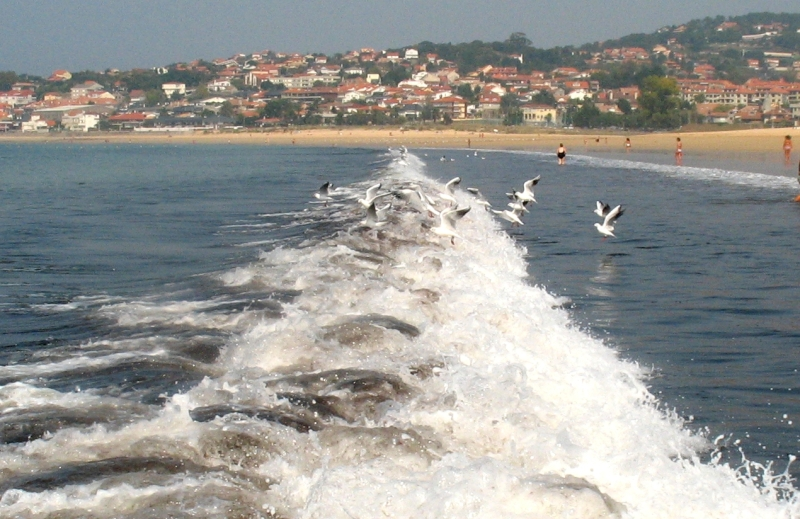 "Gulls ""jumping"" over the waves."