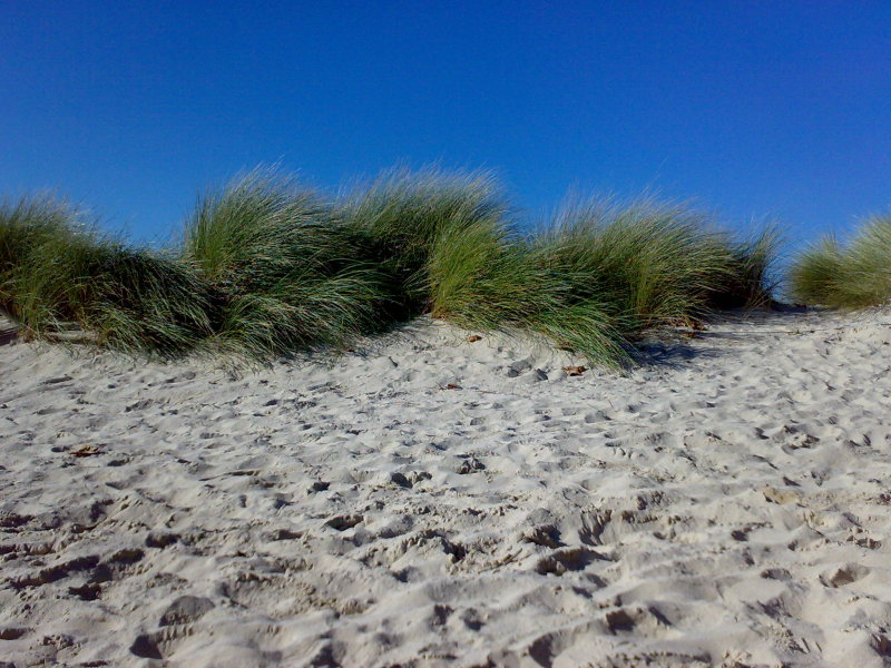 Shrubs in the dune.