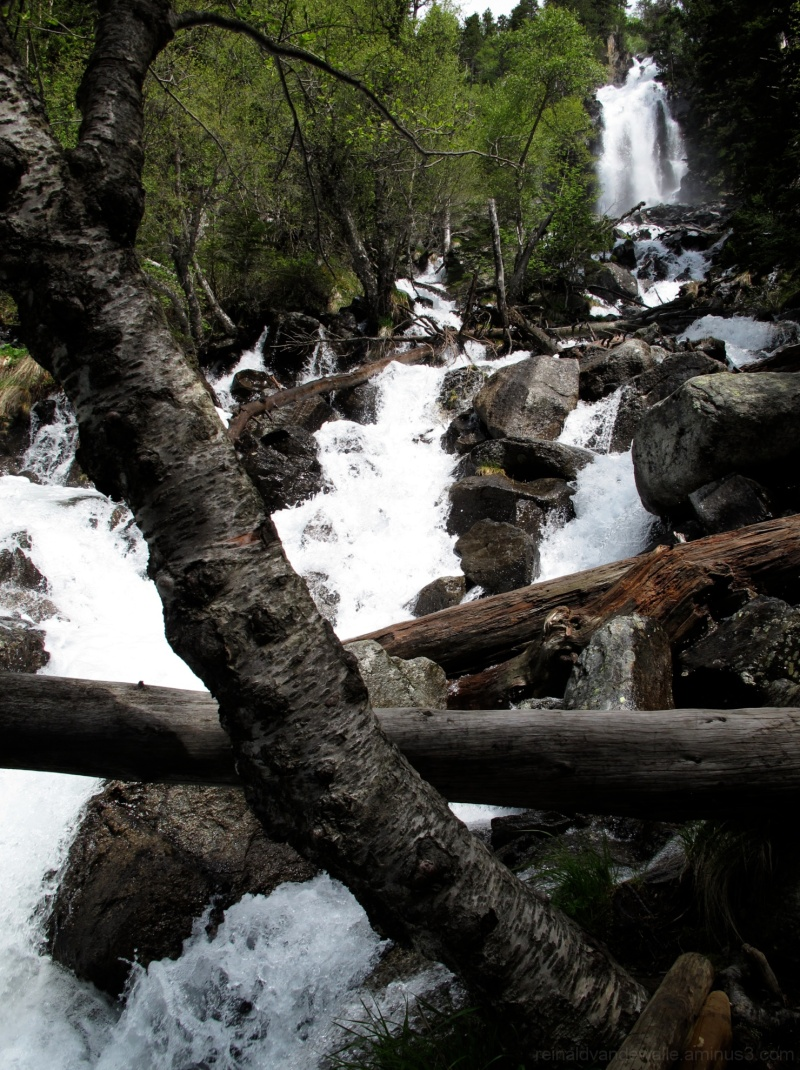 A turbulent river down between rocks and trunks