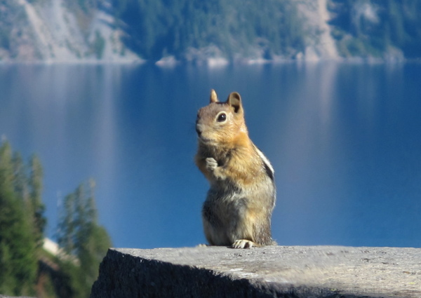A squirrel looking at me