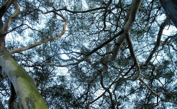 Branches backlit.