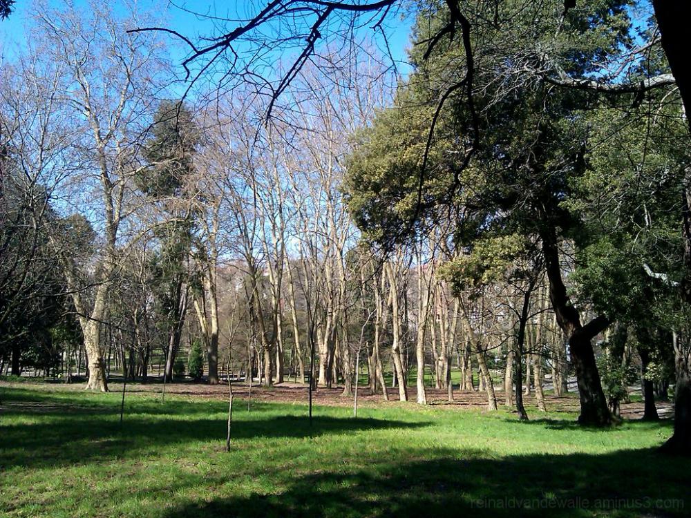 I nice sunny day at the park.