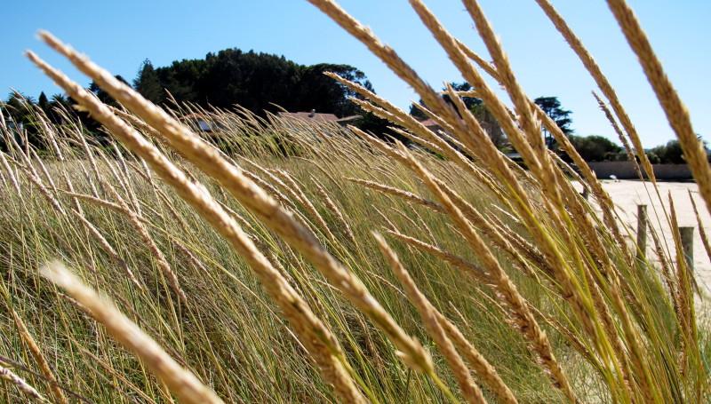 Dunes plant.