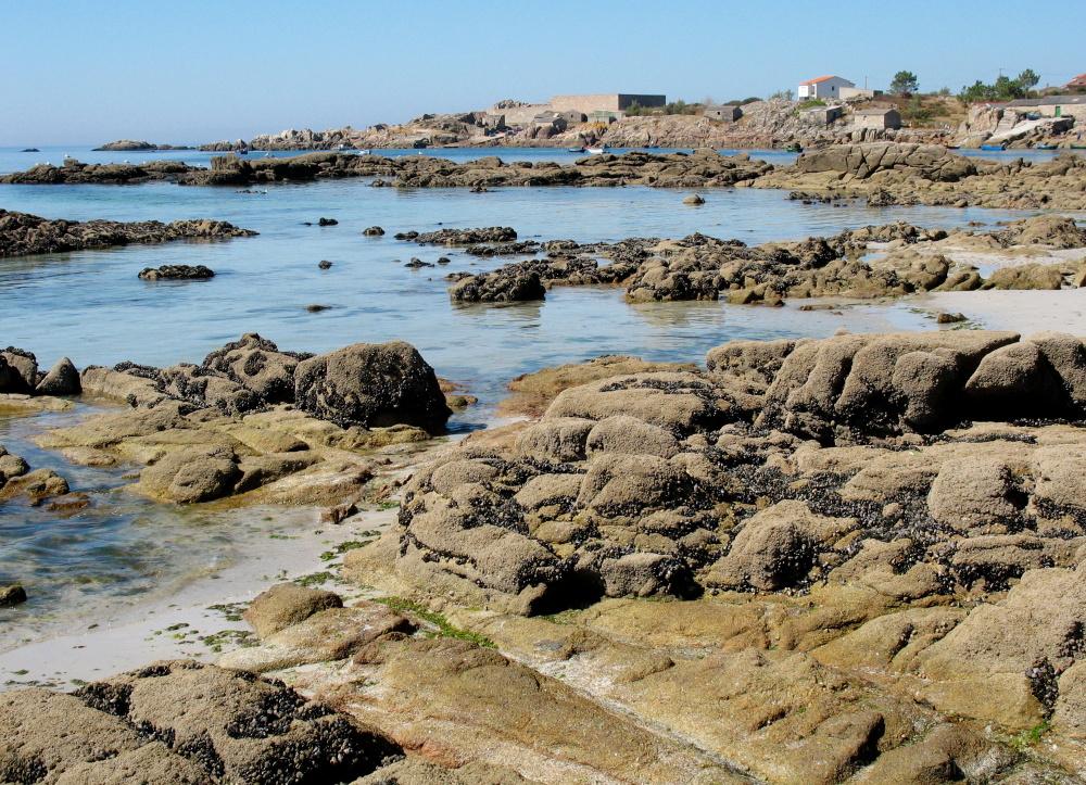 A coast oasis