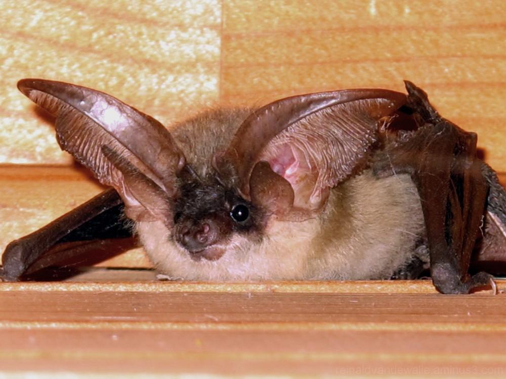 A bat looking at me