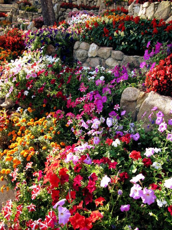 Flowers vivid colors.