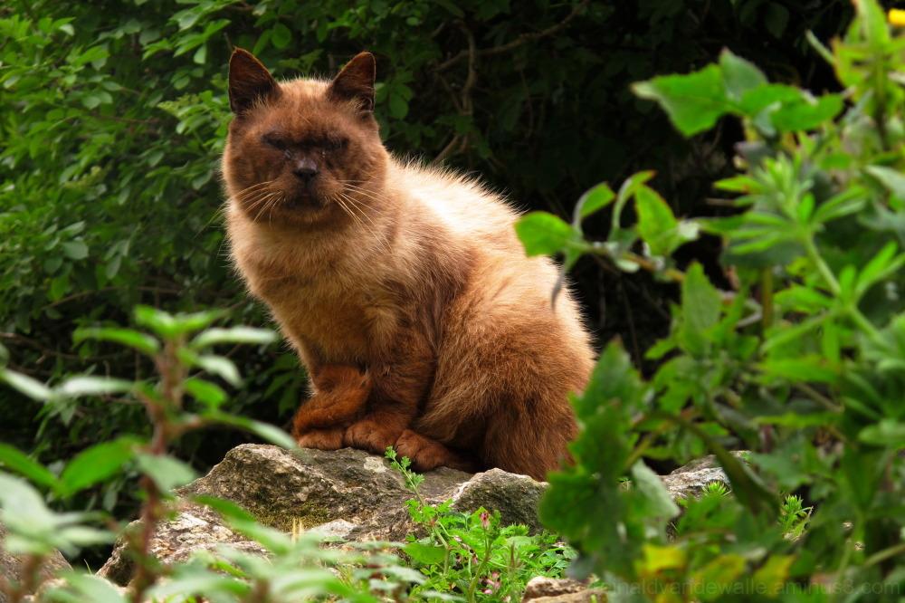 A street cat