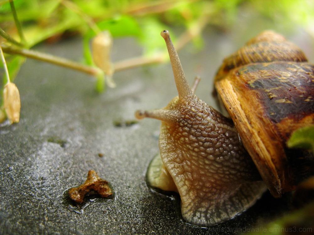 A slug looking for.