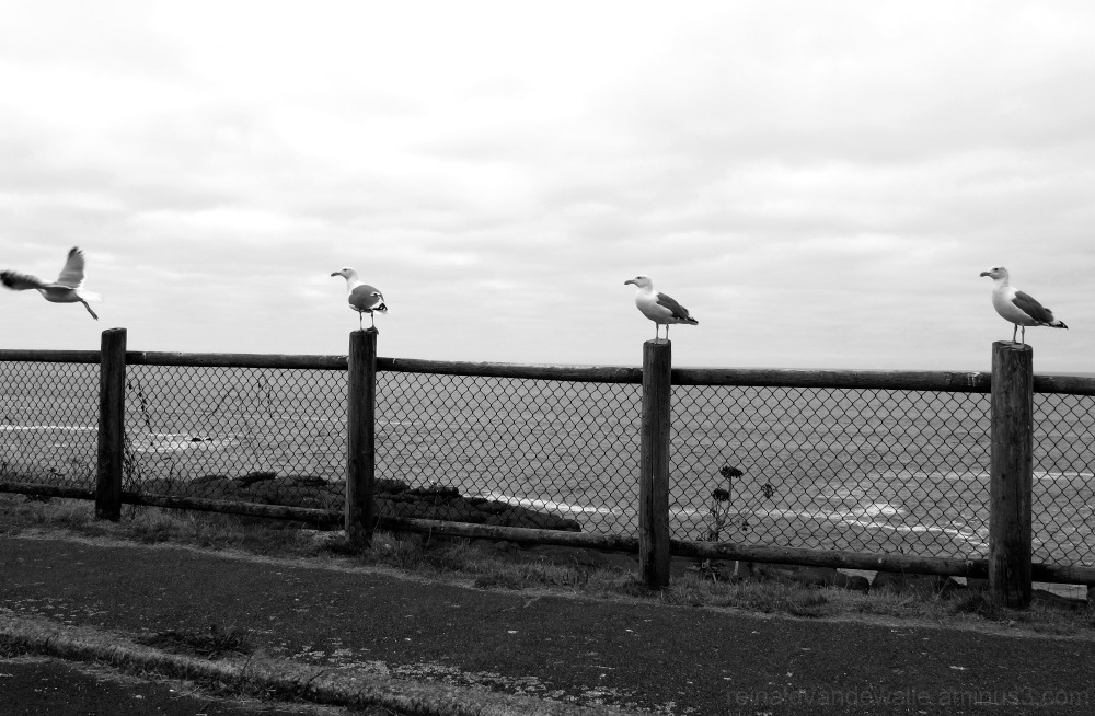 seagulls lodging on poles