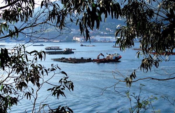 Mussel boats at Ria de Vigo