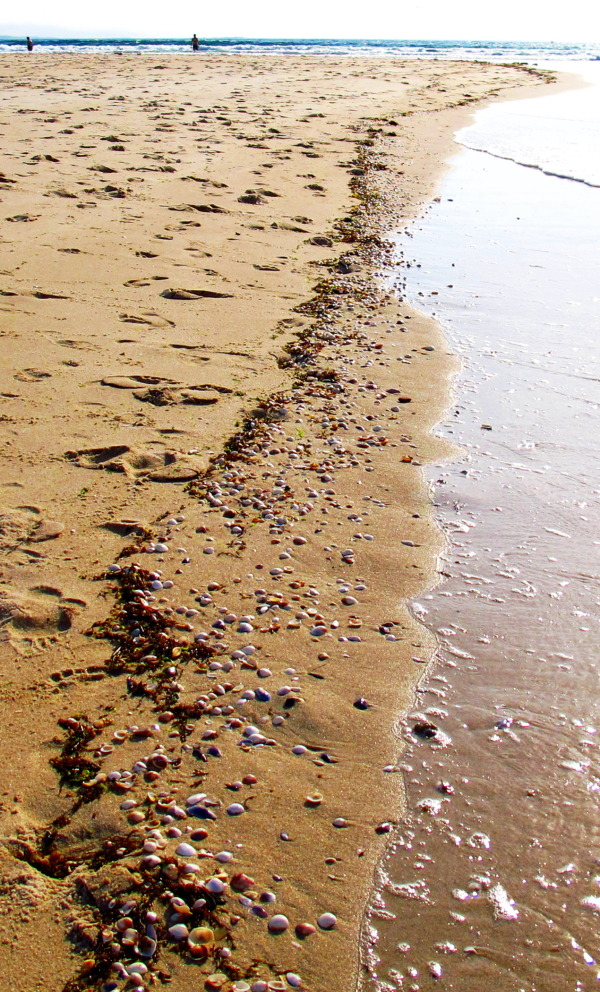 Shells path at the beach