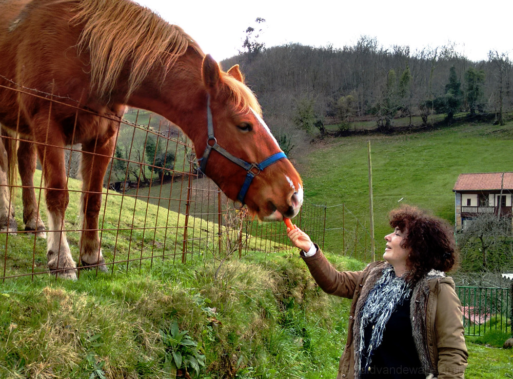 Accepting horse a carrot