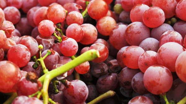 vintage grapes in process