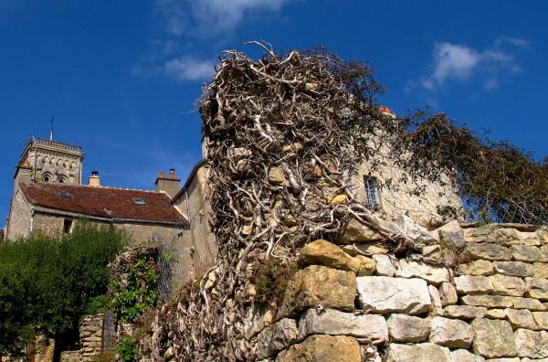 Vine branches embracing a pillar