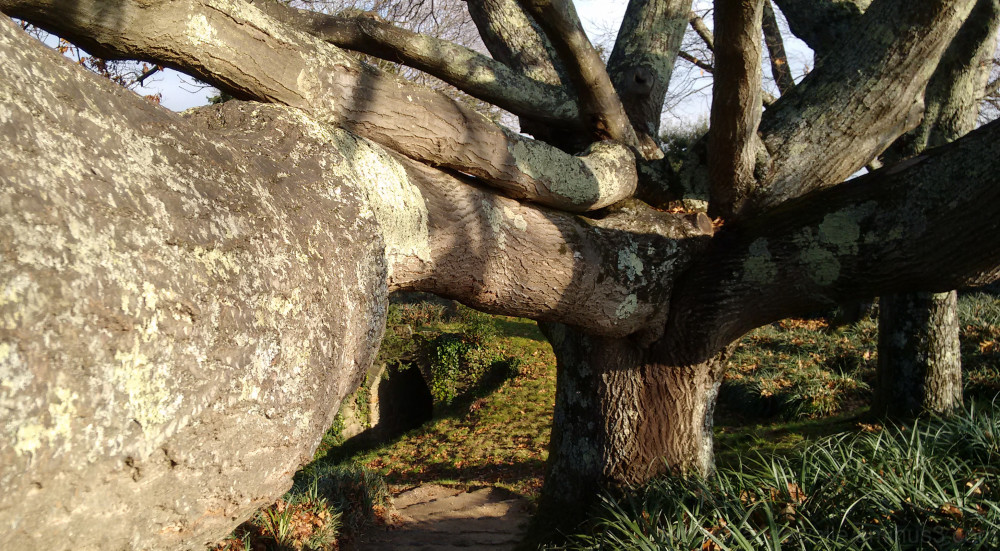 Big and strong tree branches
