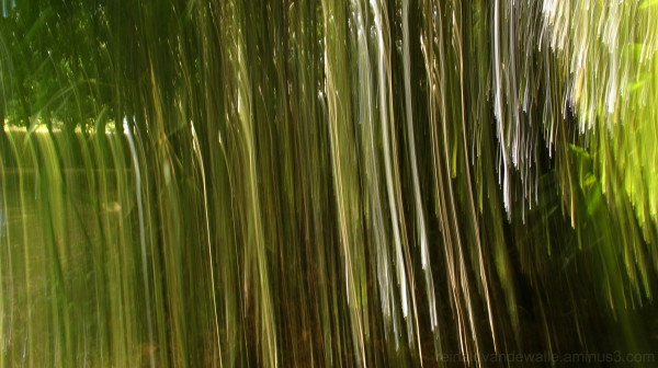 Bamboo with movement
