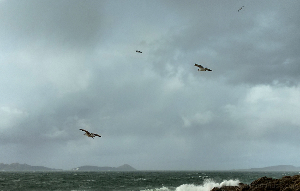 Seagulles in a stormy day