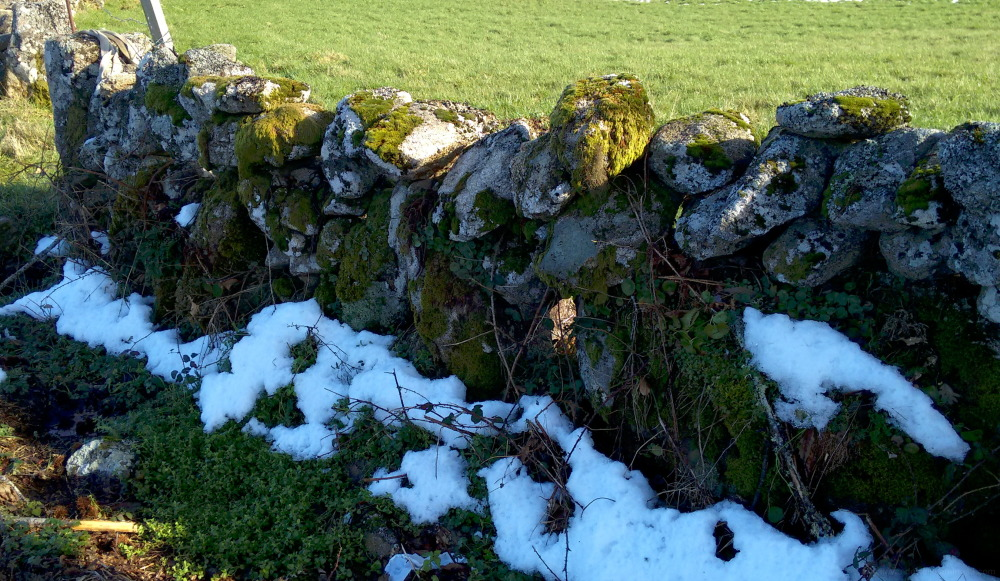 Galician rural stone fence
