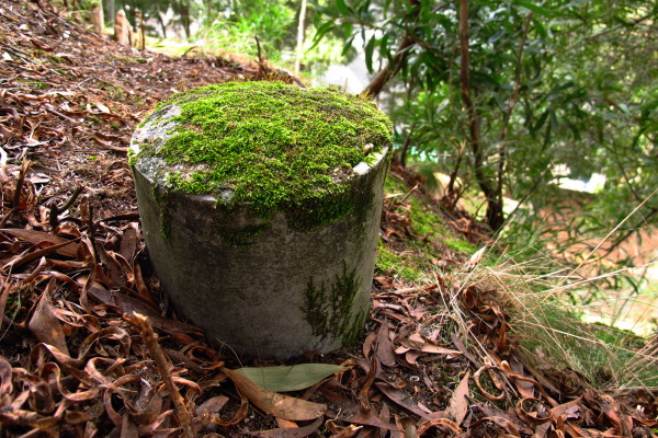 moss on a pipe