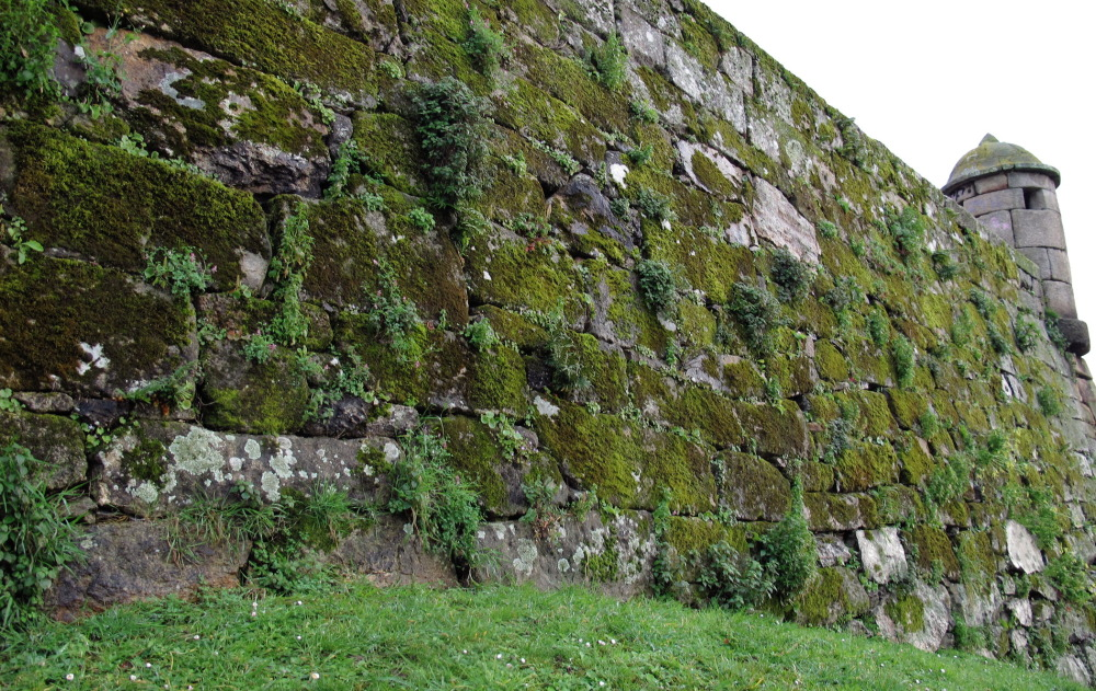 Wall with moisture