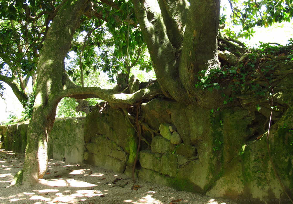 Conjunction of trees and stone wall.