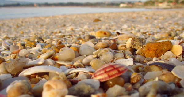 Snails and stones at the beach