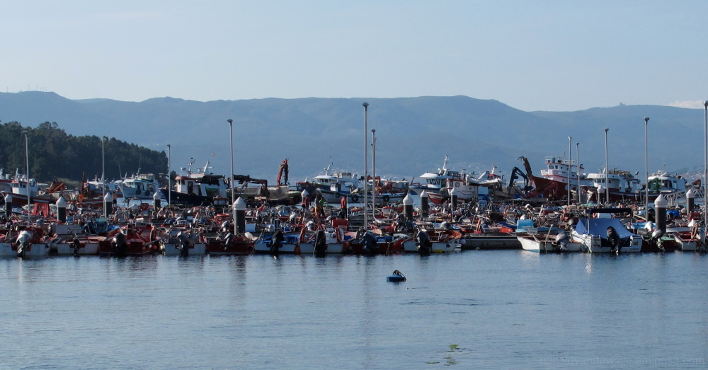A lot of fishing boats