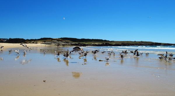 Seagulls at the sea shore