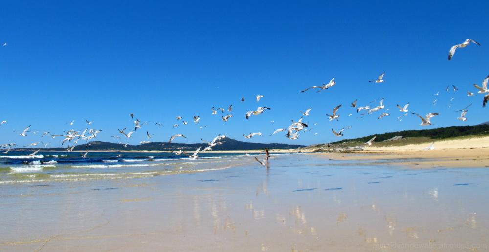 seagulls gliding