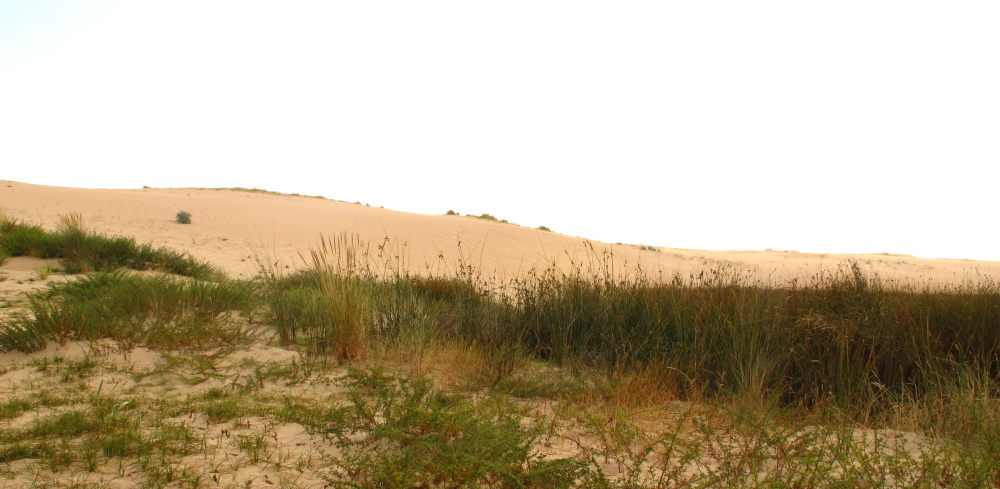 Dunes at the beach