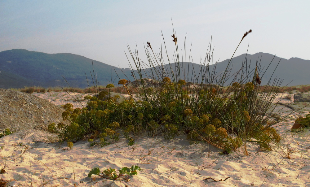 Plant in the beach sand