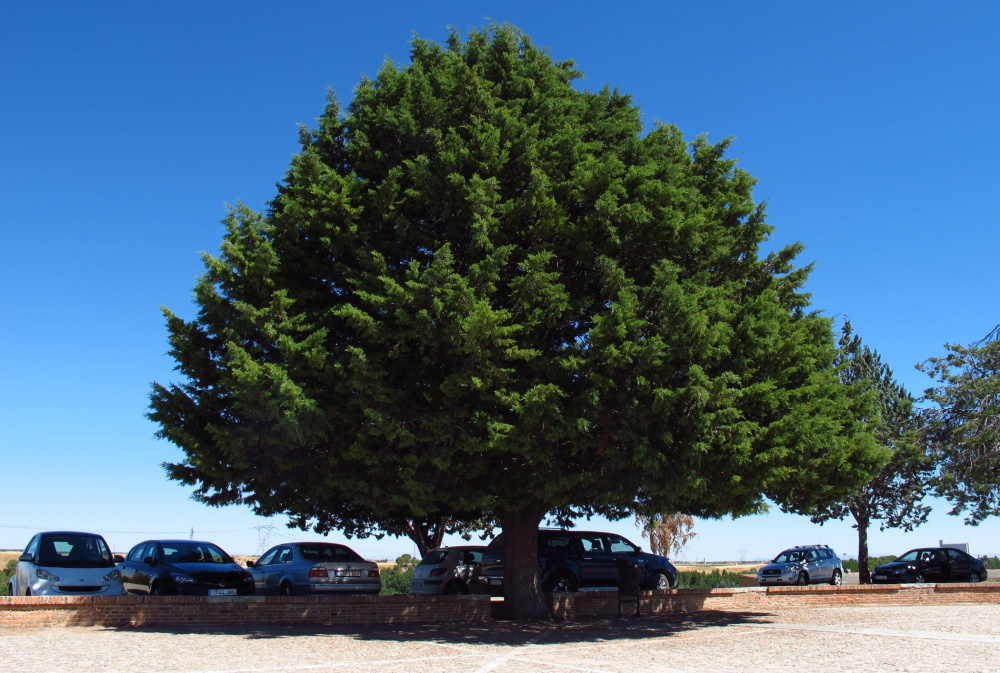Cars onder a tree