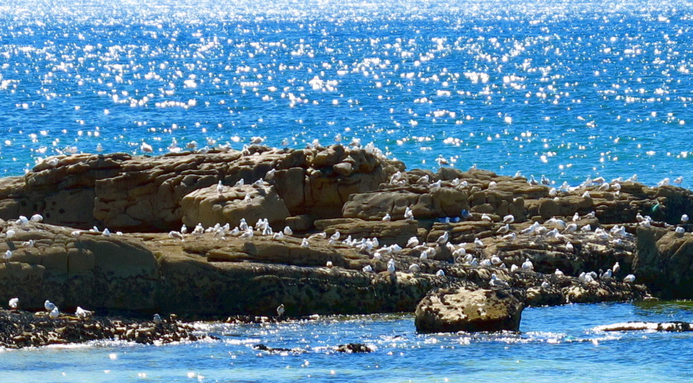 Seagulls on the rocks