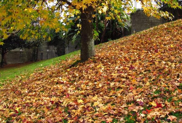 Leaves carpet