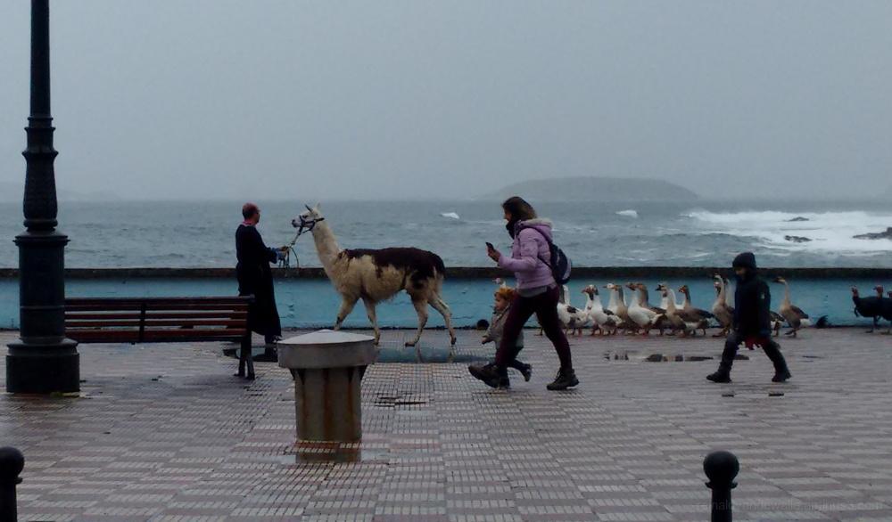 Animals at the galician coast