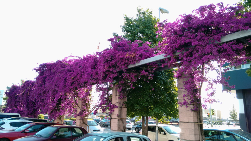 flowers in Vigo city