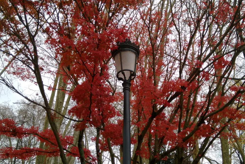Park lamp between leaves