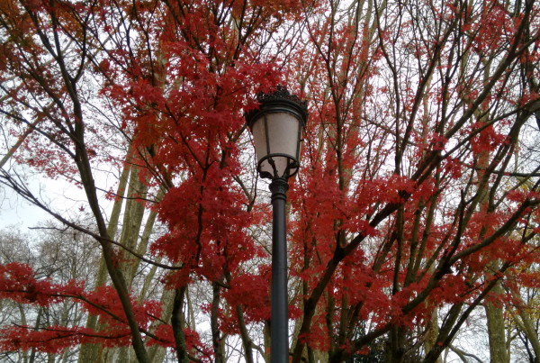 Park lamp between leaves