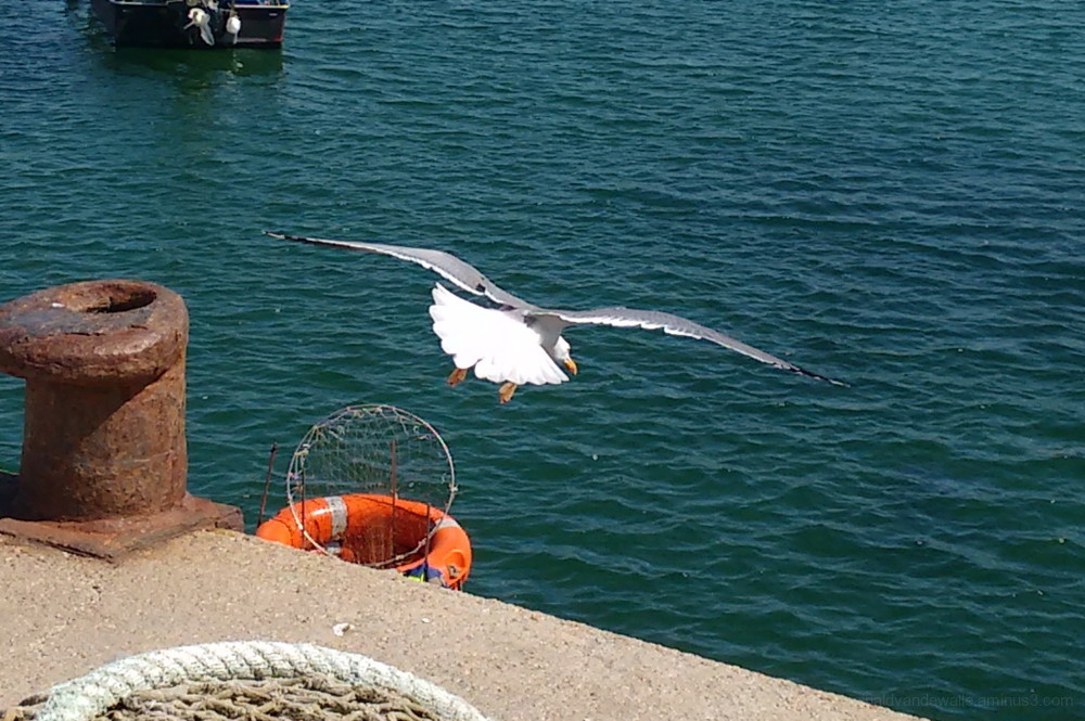 Seagull´s flight