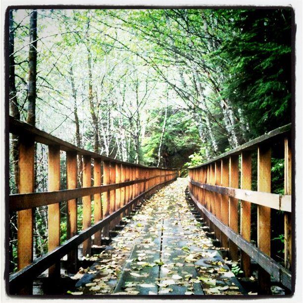tongass bridge