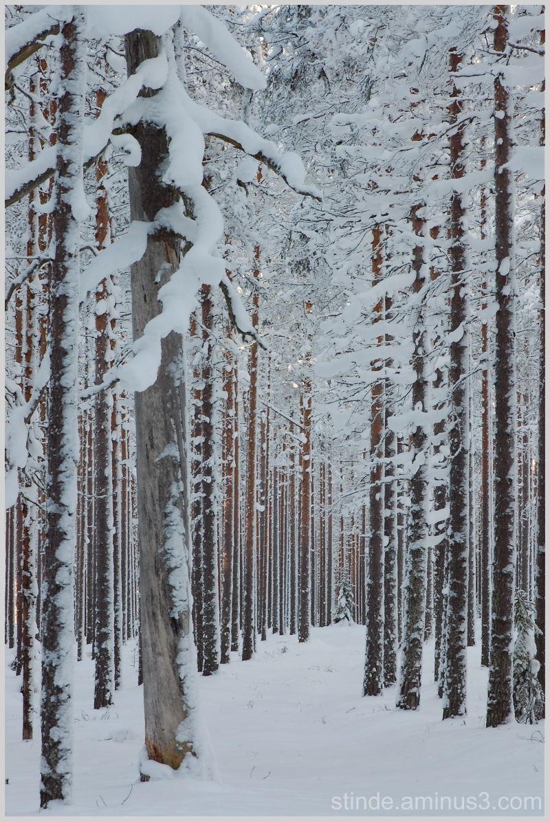 Finnish woodland, 3
