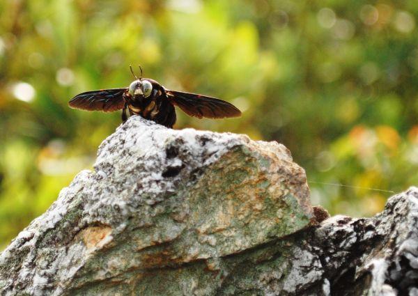 Resident bug on Tabur East Hill trail