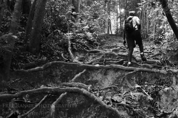 Summit Trail Mount Angsi