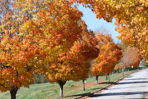 Fall Colors 2009