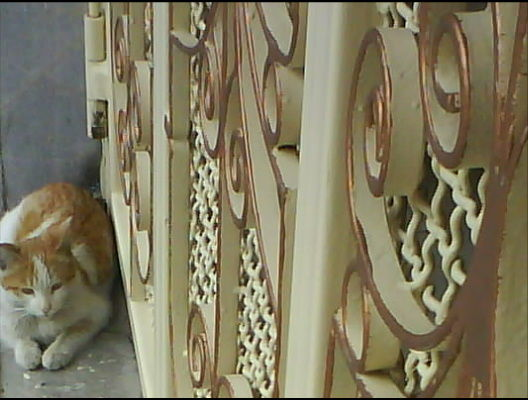 CAT WAITTINGS