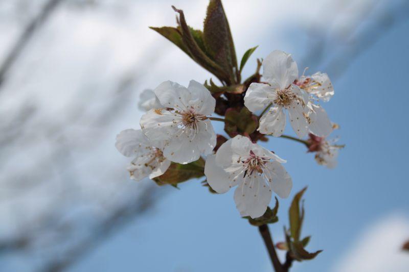 Pour un printemps à venir...