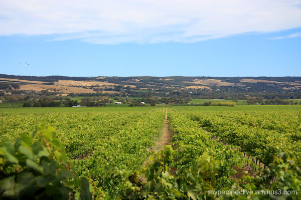 Hugh Hamilton Wines, McLaren Vale, South Australia