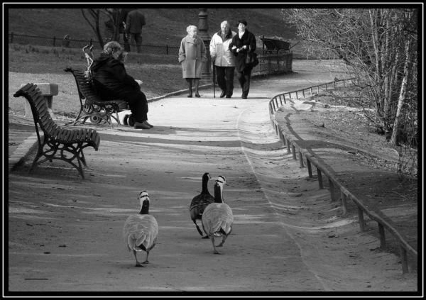 Prom'nons nous dans le parc