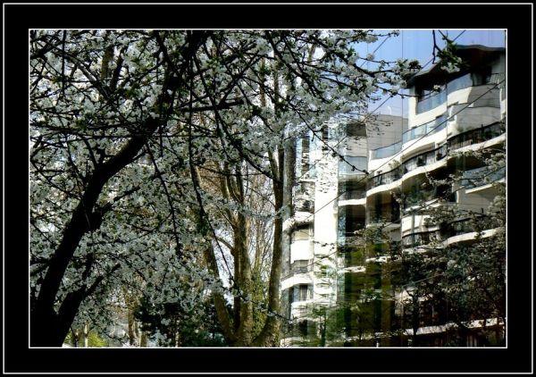 L'arbre et la ville (fin)